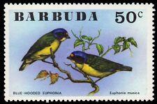 """BARBUDA 239 (SG263) - Blue-hooded Euphonia """"Euphonia musica"""" (pa54294)"""