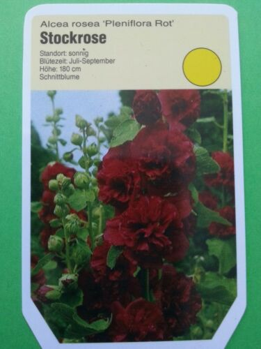 Alcea rosea plena ab 1,95 Stockrose rot