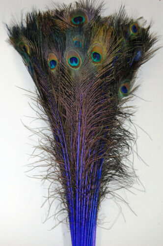 """50 Pcs DYED PEACOCK Feathers 40/""""-45/"""" ROYAL BLUE ; Halloween//Costume//Burlesque"""