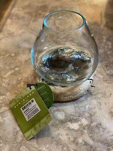 Evergreen Garden HandBlown Blue Tinted Bubble Glass On Driftwood Terrarium Décor