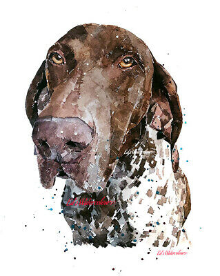 German Short Haired Pointer Dog Print approx 16 x 12 FREE UK POSTAGE