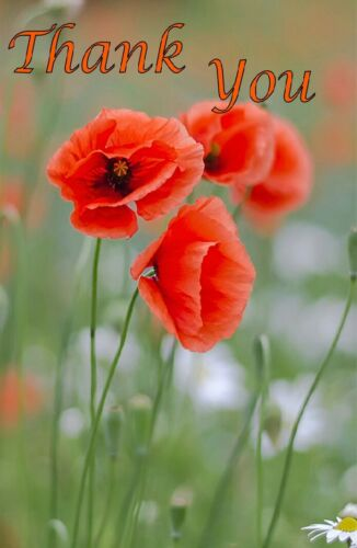 FOLDED 7X5 WITH ENVELOPE FREE P/&P Poppy PACK of 10 THANK YOU CARDS