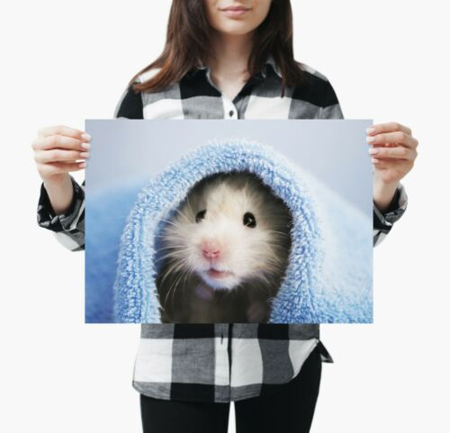 A3 Adorable Hamster Poster Print Size A3 Cute Pet Animal Poster Gift #14886