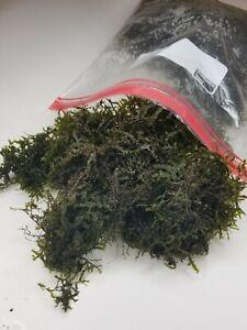 1-GALLON-BAG-full-bag-Moss-for-aquarium-live-plant-Christmas-moss-BUY3get1free