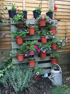 "6 plant pot hanger,ring,holder,bracket.Hang 6/"" flower pots on wall or fence S"