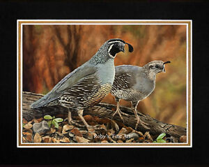 Matted-034-Cottage-Quail-034-Vallery-Quail-Art-Print-11-034-x14-034-Mat-by-Roby-Baer