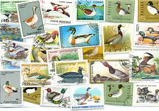 Ducks and Swans collection 50 all different-colourful med/large