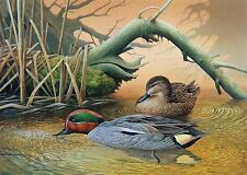 2000 Belgium Duck Stamp Press Proof by A. Buzin - Gorgeous Green Winged Teal