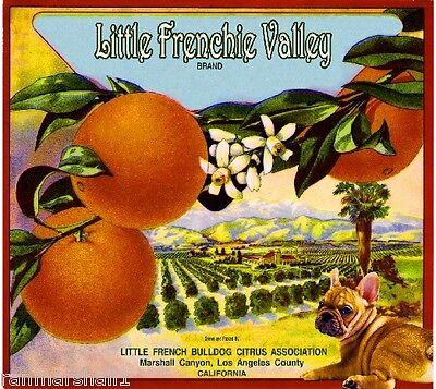 Marshall Canyon Frenchie French Bulldog Dog Orange Fruit Crate Label Art Print