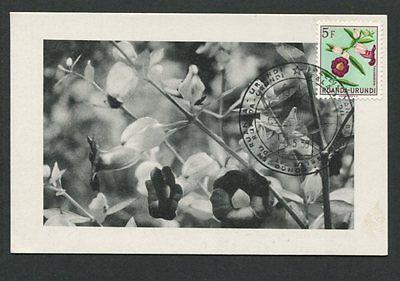Motive Ruanda-urundi Mk 1958 Flora Thumbergia Maximumkarte Maximum Card Mc Cm D7849 Natur & Pflanzen