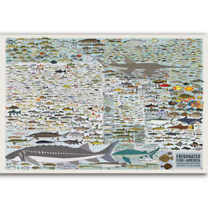 Fresh Water Fish Of America Education Children Animal Poster
