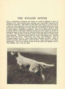 English-Setter-1931-Vintage-Dog-Print-MATTED