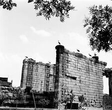 TURQUIE c. 1960 - Temple Nids de Cigognes Ankara - Négatif 6 x 6 - Tur 3