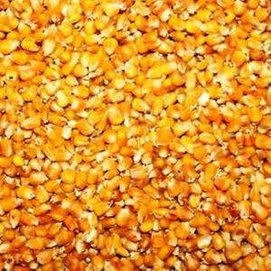 5kg-Mais-Anatre-Polli-Suini-Colombe-Oche
