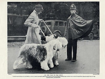 OLD ENGLISH SHEEPDOG TWO NAMED DOGS OLD ORIGINAL 1934 DOG PRINT