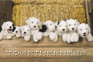 Togetherness Four Chickens on Fence Photo Art Print Poster 24x36 inch