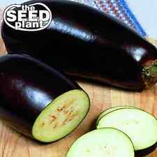Black Beauty Eggplant Seeds - 75 SEEDS NON-GMO