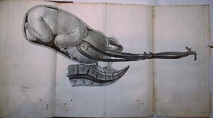 L-039-ART-des-ACCOUCHEMENTS-Jean-Louis-BAUDELOCQUE-MEQUIGNON-TOMES-1-2-EO-1781