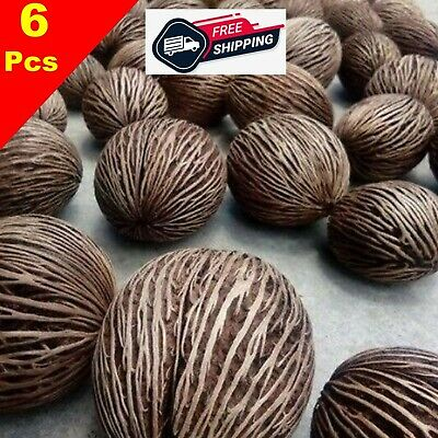 Thai Natural 100/% 6 Pieces for Home Decor or Plant Trees Multipurpuse