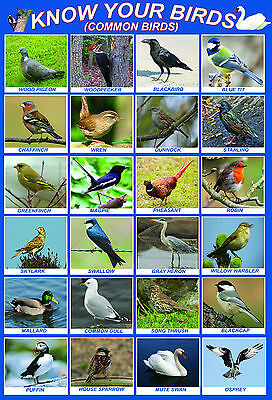 laminated  ANIMALS EDUCATIONAL KIDS POSTERwildlife children school teaching