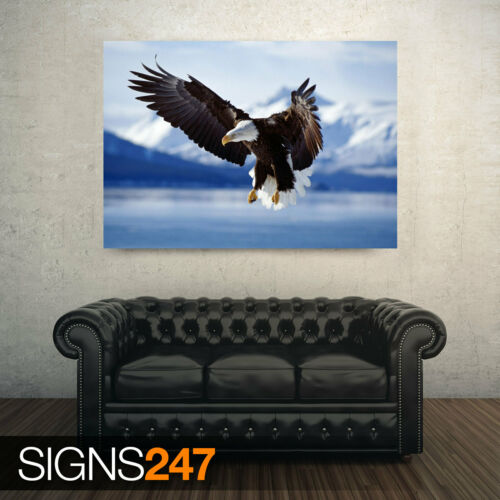 3729 BALD EAGLE IN FLIGHT ALASKA Poster Print Art A1 A2 A3 A4 Animal Poster