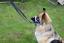 Padded-Head-Collar-Champion-Dog-Training-Halter-Stops-Dog-Pulling-Training-Tool thumbnail 6