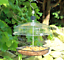 thumbnail 5 - MEALWORM FEEDER - Wild Bird Feed Holder bp Pet Food Tray kf PawMits Basket Bowl