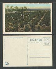 1920s BIRDS EYE VIEW OF AN ORANGE GROVE FLORIDA POSTCARD