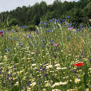 Abeilles pâturage des Fleurs Sauvages Prairie florissante Paysage pluriannuelle Mélange sans graminées  </span>