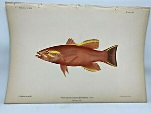 Antique-Lithographic-Print-Reef-Fishes-Hawaiian-Islands-Bien-1903-Plate-14