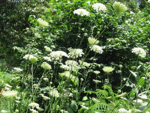 Bulk Herb seeds From  MEDITERRANEAN 38 varietes to choose Up to 85/% Germination