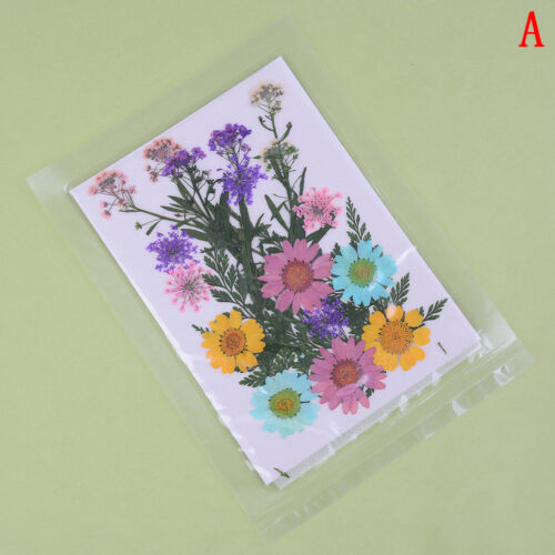 Pressed flower mixed organic natural dried flowers diy art floral decors gift Hc