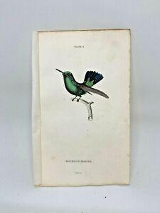 1st-Ed-Hand-colored-Jardine-039-s-Natural-History-1834-Prasina-Hummingbird-8