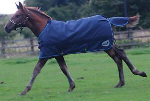Masta Zing Mediumweight Foal Turnout