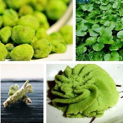 100/ 200 pcs Wasabi Seeds Japanese Horseradish Seed Vegetable