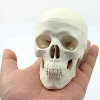 Teaching Mini Skull Human Anatomical Anatomy Head Medical Model Convenient O#
