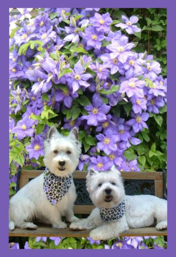 WESTIE BLOSSOMS GARDEN FLAG FREE SHIP USA