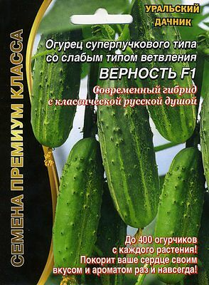 """Cucumber /""""Chinese heat tolerance/"""" F1 Russian High Quality seeds"""