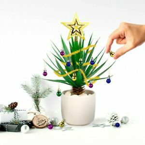 Kit-decoration-festive-pour-plante