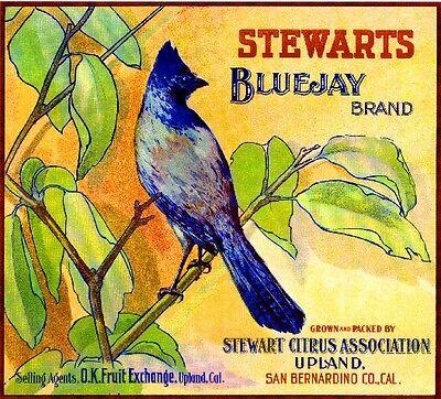 Upland Stewart/'s Coyote Orange Citrus Fruit Crate Label Art Print