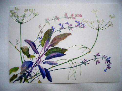 **Postkarte*Blumen*Zeichnungen* Gladiolen*Kamille*Salbei,Fenschel.....10 x 15*