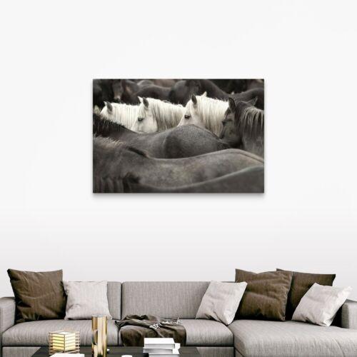 Horse Home Decor White Horses Canvas Wall Art Print