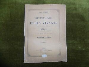 Oscar-Schneider-les-PRINCIPAUX-TYPES-DES-ETRES-VIVANTS-ATLAS-Edmond-Perrier-1882