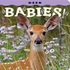 Deer Babies! by Farcountry Press (Board book, 2013)