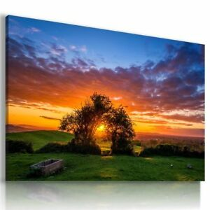 TREE-OF-LIFE-SKY-SUNSET-Perfect-View-NEW-HD-Canvas-Wall-Art-Large-L546-X-MATAG