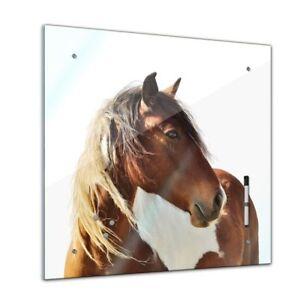 Memoboard-Tiere-Pferd-Portrait-40x40-cm