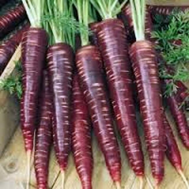 Carrots, Purple Haze Carrot Seeds, Organic, NON-GMO, 20+ seeds per package.