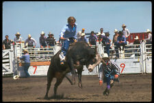 331077 Bull Riding A4 Photo Print