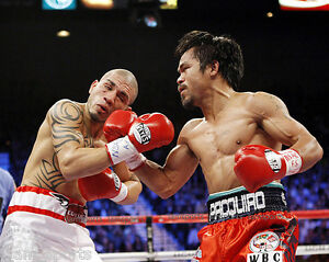 MIGUEL ANGEL COTTO 8X10 PHOTO BOXING PICTURE