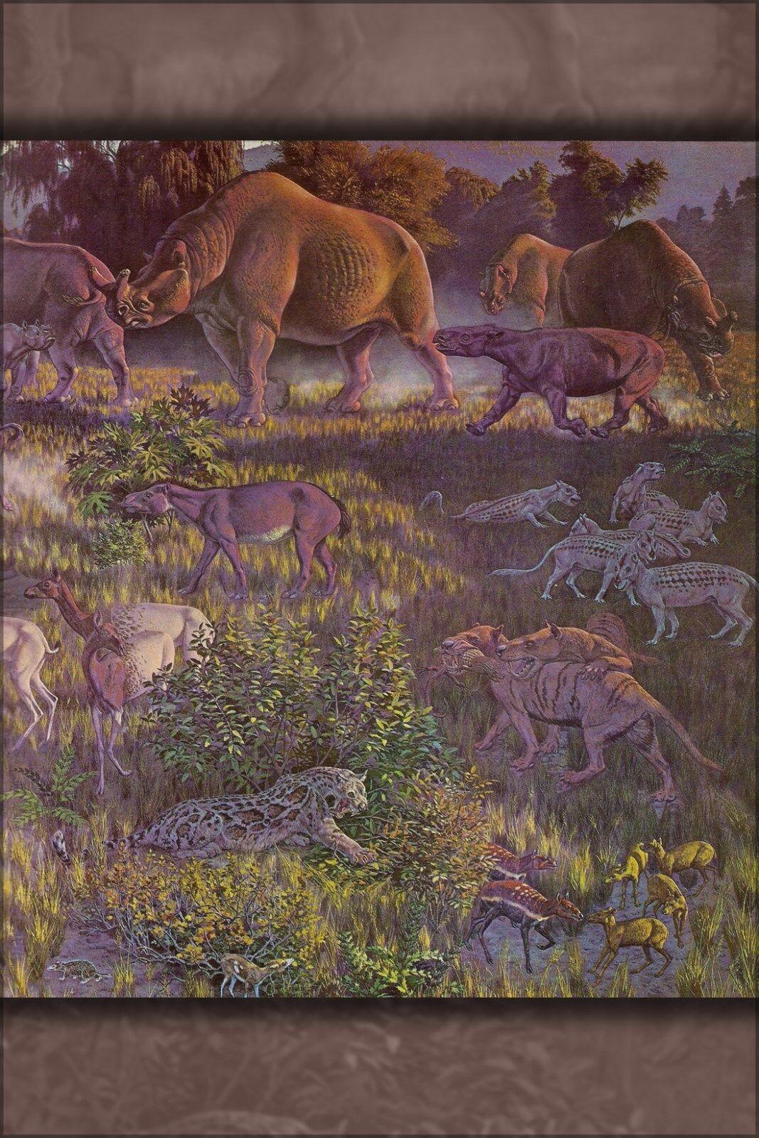 Poster, Molte Misure; Oligocene Fauna Museo Of North America, Smithsonian Museo Fauna 1964 51be09